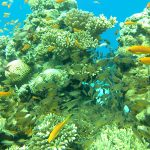 Hurghada Diving Trip